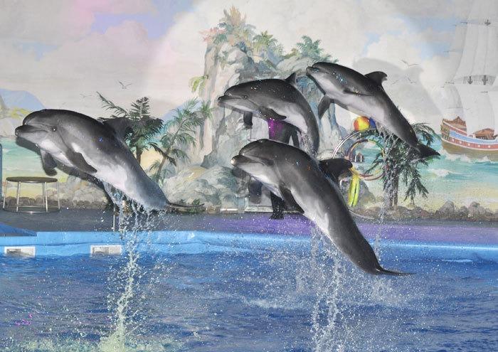 Бердянск дельфинарий