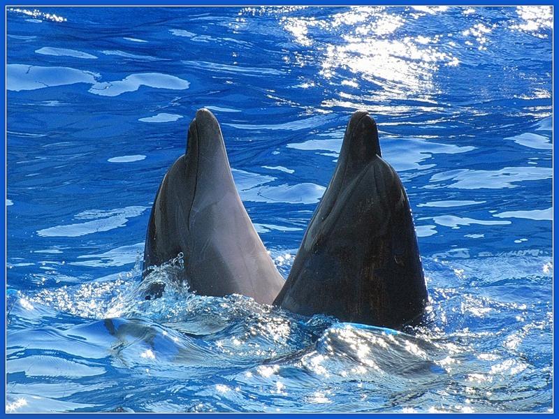 Бердянский Дельфинарий Немо